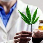 Las obras sociales y el Estado deberán cubrir el tratamiento con cannabis medicinal